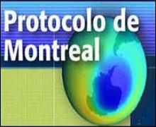 hoja transparente L/ámina de protecci/ón para Bate de Cr/íquet fibra de vidrio Antiara/ñazos